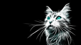 Glowing Blue Cat. Picture of aGlowing Blue cat with black background Royalty Free Stock Image