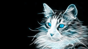 Glowing Blue Cat. Picture of a Glowing Blue Cat with black background Royalty Free Stock Photos