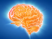 A glowing brain Stock Photos