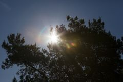 Sun halo. Glowing through the branches of a tree, a solar halo, a photo with a blue sky Royalty Free Stock Photo