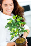Glowing businesswoman holding a plant and smiling Stock Images