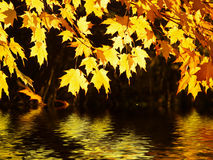 Glowing canopy over water Stock Photo