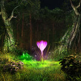 Glowing crocus in a middle of the forest Royalty Free Stock Photos