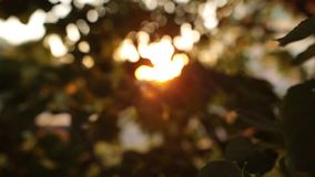 Glowing defocused summer sun through tree leaves. Abstract background. Slow motion stock footage
