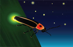 Glowing Firefly. An illustration of a firefly showing off its glow light to attract nearby mates Stock Images
