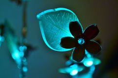 Glowing flower, which is Christmas decoration royalty free stock photos