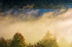 Glowing fog rise over the forest on hillside Stock Photo