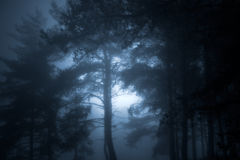 Glowing forest Stock Images