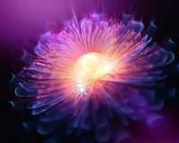 Glowing fractal background flower. Purple and pink stock photo