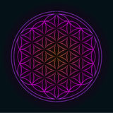 Glowing Geometrical Flower of Life. Flower of Life Pattern - Geometrical Ornament Royalty Free Stock Photos