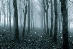 Glowing ghostly lights floating in a foggy, winter forest. With a cold blue edit.  stock images