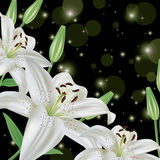 Glowing greeting or invitation card with lily Royalty Free Stock Photo