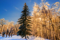 Glowing Ice Covered Tree Branches Royalty Free Stock Images