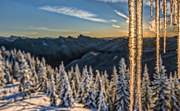 Close Up of Icicles  at Sunrise in Cascade Mountain Range Royalty Free Stock Image