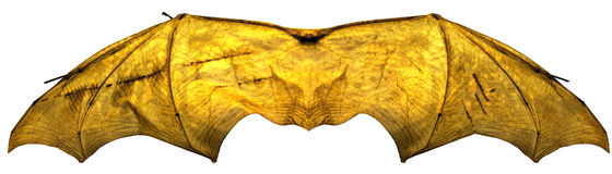 Glowing Isolated BatWings Stock Image