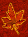 Glowing leaf. Single isolated glowing leaf on darker leaf background Royalty Free Stock Photo