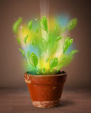 Glowing leaves coming out of flowerpot Royalty Free Stock Photography