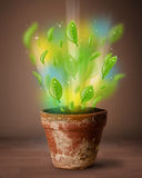 Glowing leaves coming out of flowerpot Royalty Free Stock Images