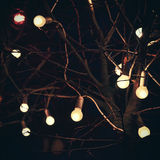 Glowing light bulbs on tree in dark at night. On black background royalty free stock photography