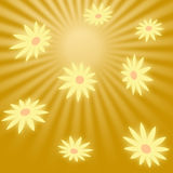 Glowing light color daisy fall from the sky against a background of golden rays Royalty Free Stock Image