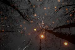 Glowing lights in the night forest royalty free stock photos
