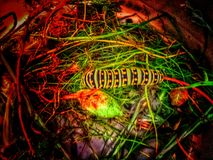 A glowing monarch butterfly caterpillar. Neon, grass Royalty Free Stock Photography