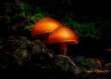 Free Glowing Mushroom In The Enchanted Forest Royalty Free Stock Photos - 167842848