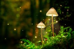 Glowing mushroom lamps with fireflies in magical forest. Closeup of glowing mushroom lamps with fireflies in magical forest royalty free stock image