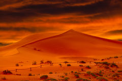 Glowing Orenge Desert Sand Dunes At Sunset Stock Images
