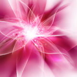 Glowing pink flower Stock Image