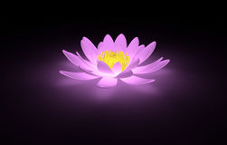 Glowing pink lotus water lily Stock Photos