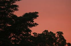 GLOWING PINK SUNSET SKY BEHIND TREE Royalty Free Stock Photos
