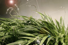 Glowing plants Stock Photography