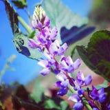 Glowing purple flower. Glowing purple wildflower Royalty Free Stock Image