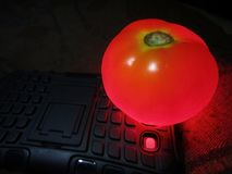 Glowing red tomato on android phone`s flash light. royalty free stock photo
