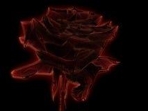 Glowing rose Stock Photos
