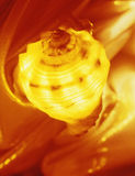 Glowing shell Stock Photos