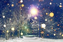 Glowing snowflakes fall in winter night park. Theme of Christmas and New Year. Winter scene of night park in snow.  Royalty Free Stock Image