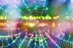 Glowing Spider Web Royalty Free Stock Image