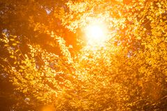 Glowing street lamp among the leaves of a tree Stock Image