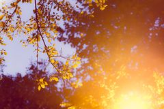Glowing street lamp among the leaves of a tree Stock Photo