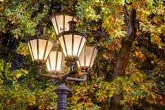 Glowing street light in foliage at night Stock Image