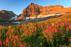 Glowing sunrise with colorful summer wildflowers flowers, Utah. Stock Photography