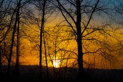 Glowing Sunset behind the trees royalty free stock images