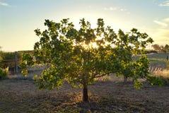 Glowing Tree Stock Photos