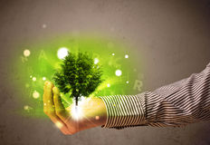 Glowing tree growing in the hand of a businessman Stock Image