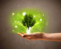 Glowing tree growing in the hand of a woman Royalty Free Stock Photos