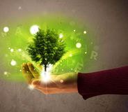 Glowing tree growing in the hand of a woman Stock Photos