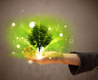 Glowing tree growing in the hand of a woman Royalty Free Stock Image