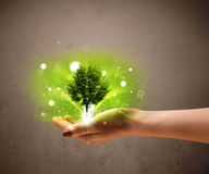 Glowing tree growing in the hand of a woman Stock Photo